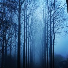 """Happy blue Monday everyone!  #bluemonday #blue #trees #nature #morning #fog"""