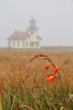 Point Cabrillo Light Station -- my favorite lighthouse!