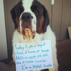 35 Hilarious Dog-Shaming Photos | iHeartRadio