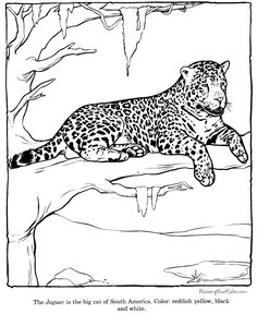 Zoo Coloring Pages For Preschoolers | Zoo Animals Coloring Picture Sheets