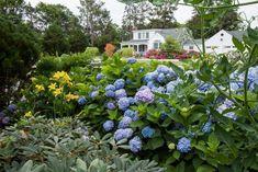 Low-Maintenance Plants and Dwarf Shrubs | DIY Hydrangea Landscaping, Front Yard Landscaping, Landscaping Ideas, Low Maintenance Plants, Low Maintenance Landscaping, Dwarf Shrubs, Endless Summer Hydrangea, Smoke Tree, Gardens