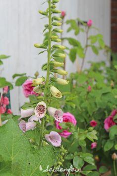 seidenfeins Dekoblog: Garten & Rosen - ein kleiner Rundgang * Garden & roses