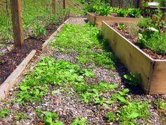 Ako sa zbaviť buriny.. bez použitia herbicídov.. Budete potrebovať len ocot a soľ.. Pripravíte si roztok … Čítať ďalej
