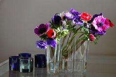 vase savoy - Bing Images Vases, Alvar Aalto, Ranunculus, Bing Images, Glass Vase, Photos, Cottage, Flowers, Projects
