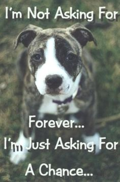 animal abuse | Stop Animal Cruelty!!! - Against Animal Cruelty! Photo (7969076 ...