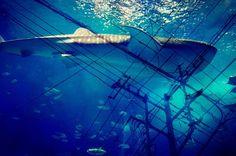 海の交差点 #東京カメラ部 #写真好きな人と繋がりたい #ファインダー越しの私の世界 #写真部 #カメラ男子 #一眼レフ #海 #青 #交差点 #写真 #tokyocameraclub #photo #photooftheday #pentax #japanfocus #sea #team_jp_ by arukurage