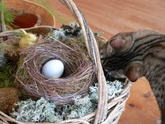 The Pecks: How-to make your own decorative bird nests