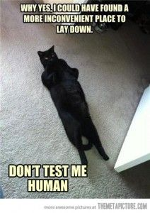 Why, yes.  I could have found a more inconvenient place to lay down.  Don't test me, human. #cat #meme #lolcat