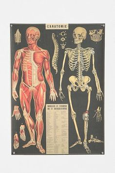 L'Anatomie Poster. I so want this...