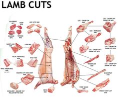 Lamb meat primal cuts and lamb cuts diagram showing lamb cuts prepared into primal cuts. Handbook of Australian Meat images of leg of lamb and other cuts. Ffa, Food Engineering, Lamb Cuts, Goat Meat, Butcher Shop, Meat Butcher, Local Butcher, Types Of Meat, Lamb Shanks