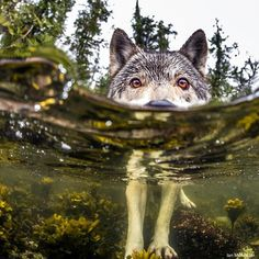 Ian McAllister's photo.