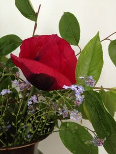 spring poppy and forget me nots late summer flowers #arrangementsbylee photo copyright lmc