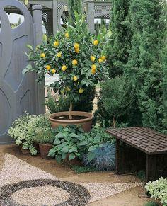 Citroenboom (Citrus Limon) kopen? Online bestellen: € 4.99 Plants, Decor, Decoration, Plant, Decorating, Planets, Deco