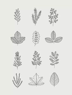 Flower Doodles Discover 30 Ways to Draw Plants & Leaves 30 Ways to Draw Plants & Leaves // Leaf drawings leaf doodles things to draw easy things to draw line art botanical drawing Botanical Drawings, Botanical Art, Botanical Line Drawing, Line Drawing Art, Drawing Faces, Botanical Gardens, Doodle Drawings, Doodle Art, Tattoo Drawings