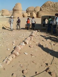 Wadi Al-Hitan (Whale Valley) World Heritage Site in the Western Desert of Egypt displays the remains of Late Eocene archeocete whales and ot...