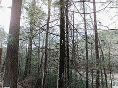 View listing details, photos and virtual tour of the Land for Sale at Lot 73 Chetola Trail, Townsend, TN at HomesAndLand.com.