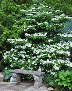 Three Dogs in a Garden: New Shrubs for 2018 Garden Shrubs, Shade Garden, Garden Paths, Garden Art, Garden Landscaping, Garden Design, Waterfall Landscaping, Backyard Waterfalls, Backyard Ponds
