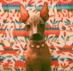 Your dog has finally reached his adulthood and this means that the period of training, adjusting, socializing, and more training have come. Cute Puppies, Cute Dogs, Mexican Hairless Dog, Funny Dog Faces, Aztec Art, Fun Illustration, Arte Popular, Mexican Art, Dog Care