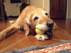 Ball! Good!