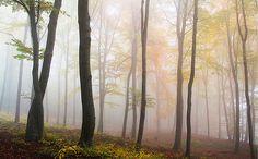 Come fotografare l'#autunno: la guida completa | Francesco Magnani Photography #fotografia #blog #consigliperscattare