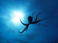 There has to be a giant octopus out there somewhere. Scary but so beautiful.