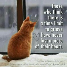 There is no time limit for grief. I remember 65 years of pets and beloved animals in each house I lived. Crazy Cat Lady, Crazy Cats, Rip Daddy, Pet Loss Grief, I Love Cats, In This World, Dog Cat, Life Quotes, Inspirational Quotes
