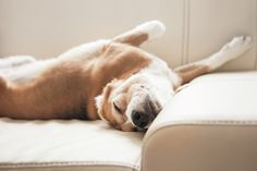 5 Tips for Buying Dog-Friendly Furniture and Accessories  #dogs
