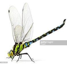 Resultado de imagen para dragon fly