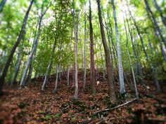 🌳TREES🌳STROMY🌳 ••• #tree #stromy #relax #nature #priroda #autumn #podzim #forest #les #ticho #silence #czech #vylet #trip #🌳 #photography #mobilephoto #lovetonature #laskakprirode #respectnature #respektkprirode #followme #❤