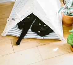 Gray dot + stripes teepee tent - more than just dog bed. Perfect place for your cat, Pug or English Bulldog. Bed Tent, Teepee Tent, Cat Teepee, Take A Nap, Wild Life, Black Cats, Dog Bed, Glamping, Pugs