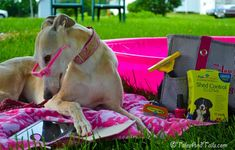 Staying Cool by the Pool -- Tales and Tails #PetHairSolutions