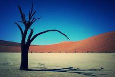 Le DeadVleï  (« la vallée morte ») est une cuvette d'argile blanche située au pied des dunes de sable deSossusvlei, dans le désert de Namib (Namibie).