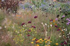 Prairie Planting, Prairie Garden, Colorful Garden, Colorful Flowers, Wild Flowers, Plant Design, Patio Design, Golden Garden, Autumn Scenes