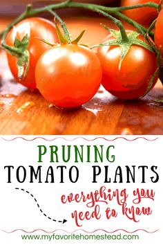 Wondering whether or not you should prune your tomato or pepper plants? Vegetable Garden For Beginners, Backyard Vegetable Gardens, Starting A Vegetable Garden, Gardening For Beginners, Growing Tomatoes, Growing Vegetables, Fresh Vegetables, Bell Pepper Plant, Pepper Plants