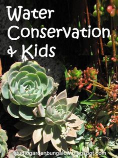 Ideas for Teaching Water Conservation to Kids (and Grownups) @ Studio, Garden & Bungalow.