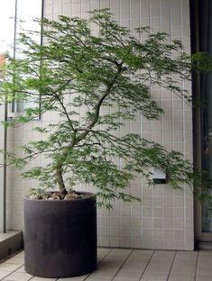 Living Room Plants, House Plants Decor, Plant Decor, Balcony Plants, Outdoor Plants, Garden Yard Ideas, Garden Planters, Rooftop Garden, Indoor Garden