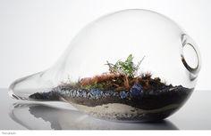O terrário se mantém sozinho. Semanalmente pode-se abrir o terrário para colocar um pouco de água (verifique se é realmente necessário, o mesmo deve estar úmido e não encharcado), limpar o vidro e colocar mais plantas.    Se tiver água demais é necessário deixá-lo alguns dias aberto para que a água evapore. Se as plantas crescerem tomando todo o espaço, corte-as ou substitua-as.