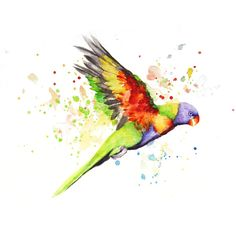 Parrot Boba art Watercolor Painting Art Print Cute ($14) ❤ liked on Polyvore featuring home, home decor, wall art, watercolor painting, parrot paintings, water colour painting, water color painting and parrot wall art