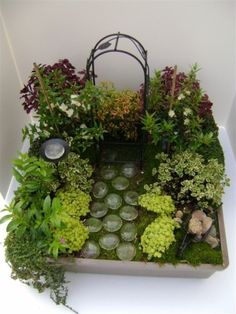 Click through for a do it yourself Fairy Garden Design. This one is called A Step in the Right Direction! It features webfoot coleus, elfin herb, red mars coleus, rocks, variegated marjoram and more! Mini Fairy Garden, Fairy Garden Houses, Gnome Garden, Garden Path, Fairies Garden, Bamboo Garden, Little Gardens, Small Gardens, Garden Crafts