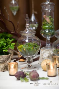 "Terrariums- I need to add some ""green"" to our house...but don't want the dogs to eat plants.  I'll be trying these for sure!"