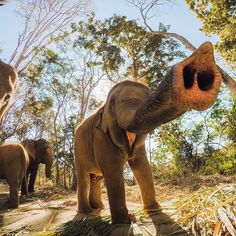gopro : Photo of the Day! Someone was happy to sniff out the Rescued elephants in Thailand come up close to say hello to Josiah Klakulak. Happy Elephant, Wild Elephant, Elephant Love, Elephant Art, Gopro, Arugam Bay, Safari, Thailand Elephants, Action Photography