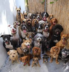 All dogs together
