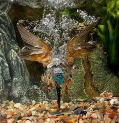 Funny Wildlife, Epic Dive!! by Martin Pescatore