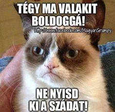 Grumpy cat frowns on your shenanigans. Grumpy cat is not impressed. I wonder if grumpy cat is an engineer. I did find some Grumpy Cat gifs: Grumpy Cat say \ Grumpy Cat Quotes, Funny Grumpy Cat Memes, Hilarious Memes, Funny Quotes, Grumpy Kitty, Funny Pranks, Grumpy Car, Grumpy Cat Birthday, Angry Cat Memes