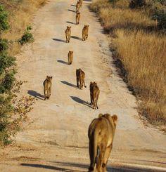 Lion Family, Painting, Animals, Art, Art Background, Animales, Animaux, Painting Art, Kunst