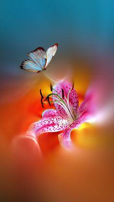 Lily Wallpaper, Nature Iphone Wallpaper, Beautiful Nature Wallpaper, Heart Wallpaper, Butterfly Wallpaper, Butterfly Art, Cellphone Wallpaper, Colorful Wallpaper, Wallpaper Backgrounds