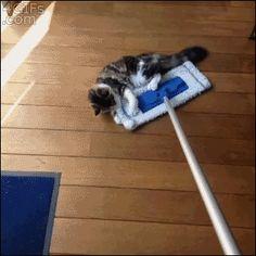 (gif) Swiffercats...I want to help!