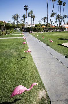 Pink flamingos lining a path for wayfinding