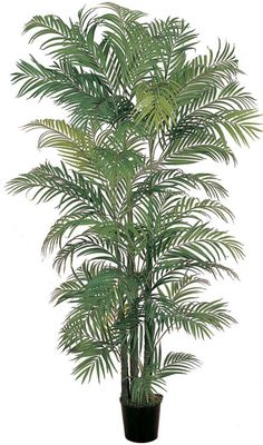 Add a tropical feel to your home or office with this lovely six-foot silk palm tree. This realistic-looking tree has eight trunks and over 1,400 leaves for fullness, and it comes in a black pot with a moss covering for an authentic look.
