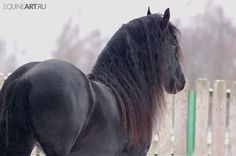 no, your mane doesn't make your ass look too big....